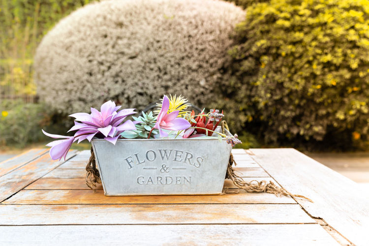 beautiful flowers in pot on wooden vintage table with tree background Flower Plant Flowering Plant Text Nature No People Communication Western Script Cemetery Beauty In Nature Celebration Day Flower Arrangement Tombstone Close-up Event Outdoors Wood - Material Grave Freshness Bouquet Flower Head Purple Message