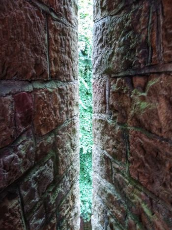 arrowslit from castle coch 1877 Tree Textured  Full Frame Backgrounds Close-up Green Color Stone Wall Fortress Entryway Archway