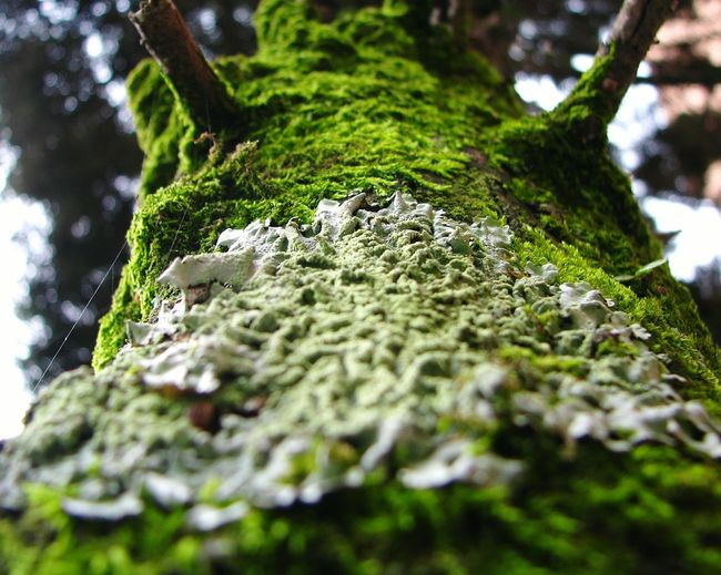Low angle view of moss growing on tree trunk