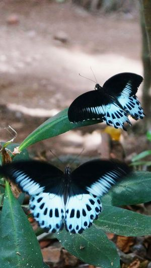 Butterflies Butterfly ❤ Butterfly Collection Taking Photos Check This Out Konkandiaries