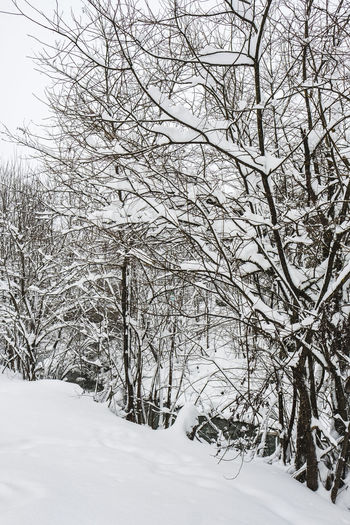 Snow Winter Cold Temperature Tree Bare Tree Plant Beauty In Nature Branch Tranquility Nature Covering White Color No People Environment Land Scenics - Nature Day Tranquil Scene Frozen Outdoors Extreme Weather Winter Wonderland