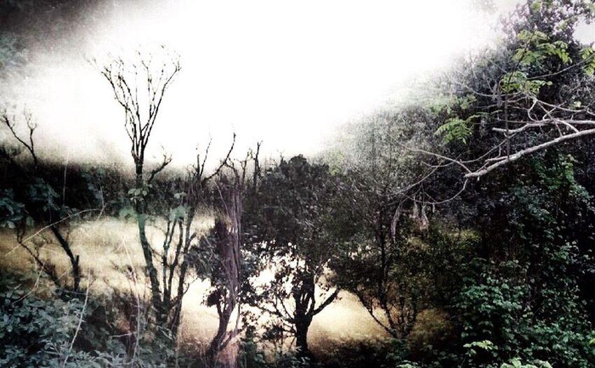 合成です。 森のクマさん、いいと思うんだけどなぁ... https://youtu.be/tbmhHiLDlps Nature EyeEm Art ₍ᐢ•ﻌ•ᐢ₎