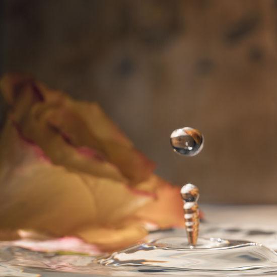 Flowers Indoors  Kitsch Oder Kunst Love ♥ Reflection Romantic Roses🌹 Splashing Water Water Waterdrops
