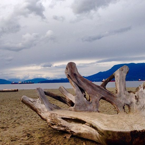 A massive piece of driftwood that someone sanded down and shaped into a hand shape. Jericho Beach Vancouver BC Vancouverbc Beaitifulbc Beach Sand overcast mountains ocean jerichobeach clouds