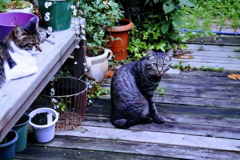 Domestic Cat Pets Domestic Animals Mammal Animal Themes Outdoors Feline One Animal Sitting Day No People Cat Cute