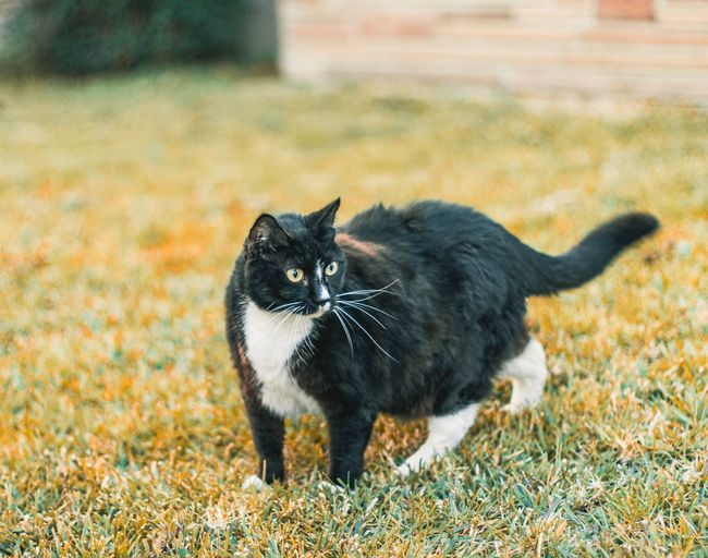 Chonk Animal Themes Animal Mammal One Animal Domestic Pets Domestic Animals Cat No People Canine Vertebrate Nature Domestic Cat Black Color Feline Focus On Foreground Day Outdoors Portrait Dog