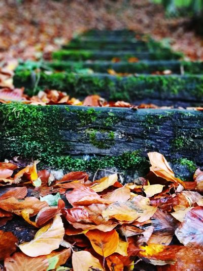 Stairs Wood Old Leaf Autumn Nature Outdoors Close-up Change Fragility Warm Colors Wet Moss Moss-covered Oldwood Oldstairs Leaves Herbst Perspectives On Nature