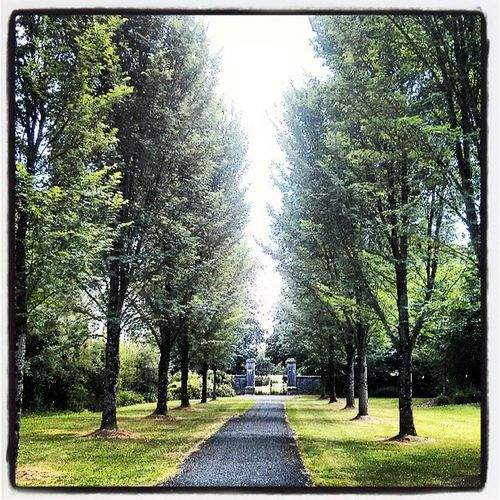 Walk at the park