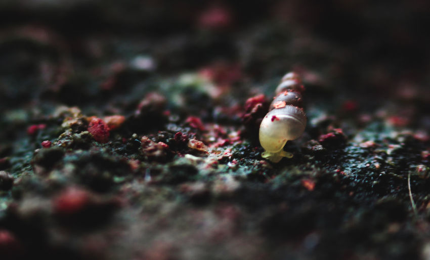 EyeEm Selects Snail Snailshell Snail Photography Canon Beginner Beginnerphotographer Canon1300d Canonphotography DSLR Close-up Beauty In Nature Macro Macro Photography Colourful Selective Focus No People Outdoors