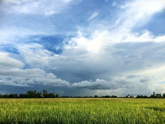 Paddy Field Landscape_Collection