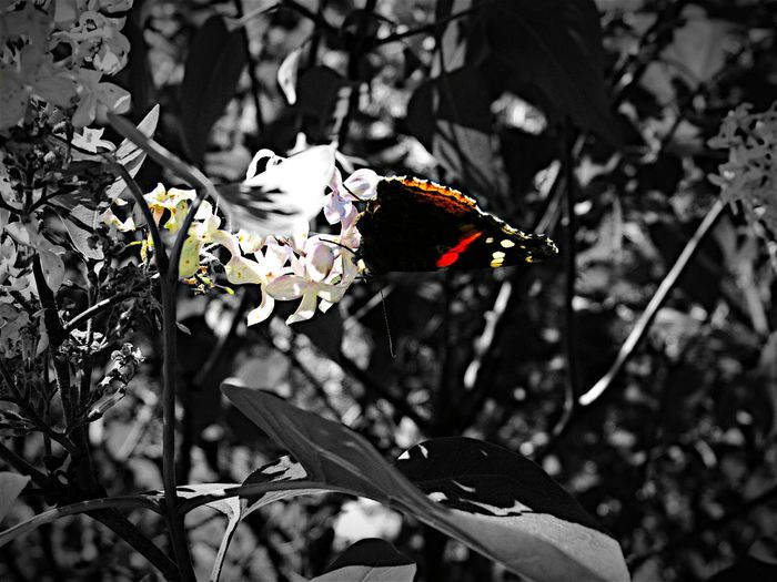 Taking Photos Check This Out Wildlife EyeEm Best Shots EyeEm Best Edits Modern Art Colorsplash Artistic Expression Flower Collection . Getting Creative