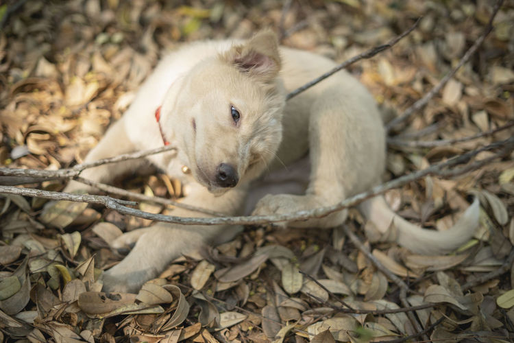 One Animal Animal Themes Animal Mammal Vertebrate Canine Dog Relaxation No People Domestic Pets Domestic Animals Land Day Plant Part Nature Young Animal Field Leaf Plant Animal Head  Stick - Plant Part