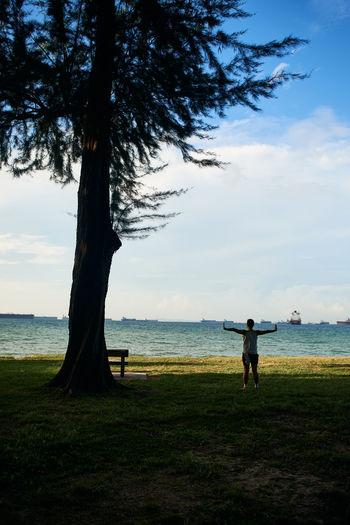 Tree on field by sea against sky