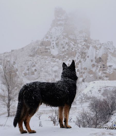 Wolf standing on snow against mountains