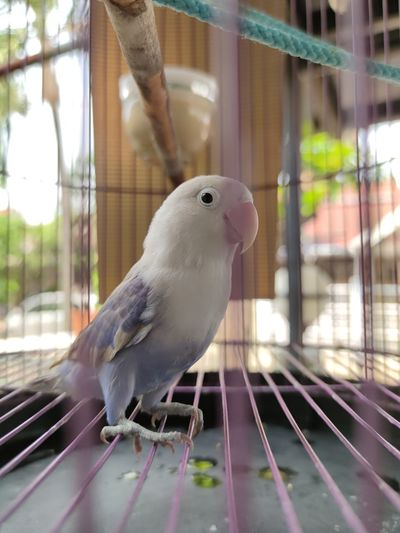 Close-up of a bird in cage