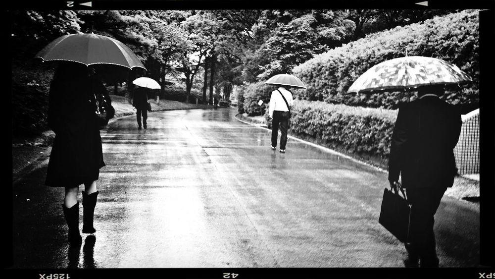福岡、梅雨景色。 傘 梅雨入り