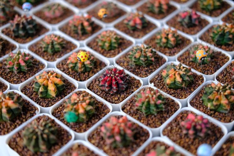 Cactus Cactus Garden Cactus Collection Cactus Flower Cactus Plant Nature Growth No People Backgrounds Outdoors Day Fragility Greenhouse Freshness