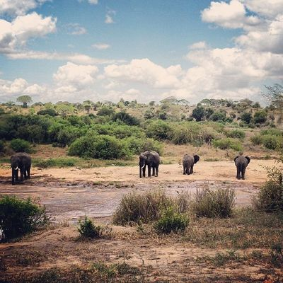 Tanagire Serengeti Africa Tanzania safari