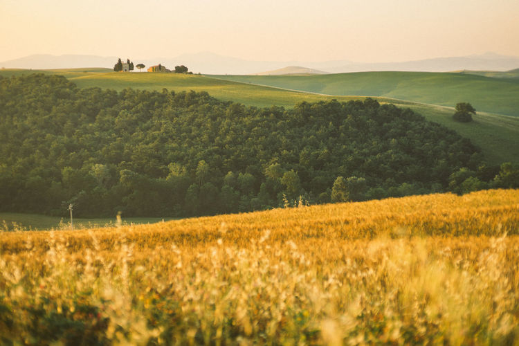 Sunrise on Tuscany hill, Italy Landscape Landscape Environment Plant Land Field Rural Scene Agriculture Scenics - Nature Tree Tranquil Scene Beauty In Nature Tranquility Nature Farm Crop  Sky Grass Day Non-urban Scene Cereal Plant No People Outdoors Rolling Landscape Sunrise Golden Hour