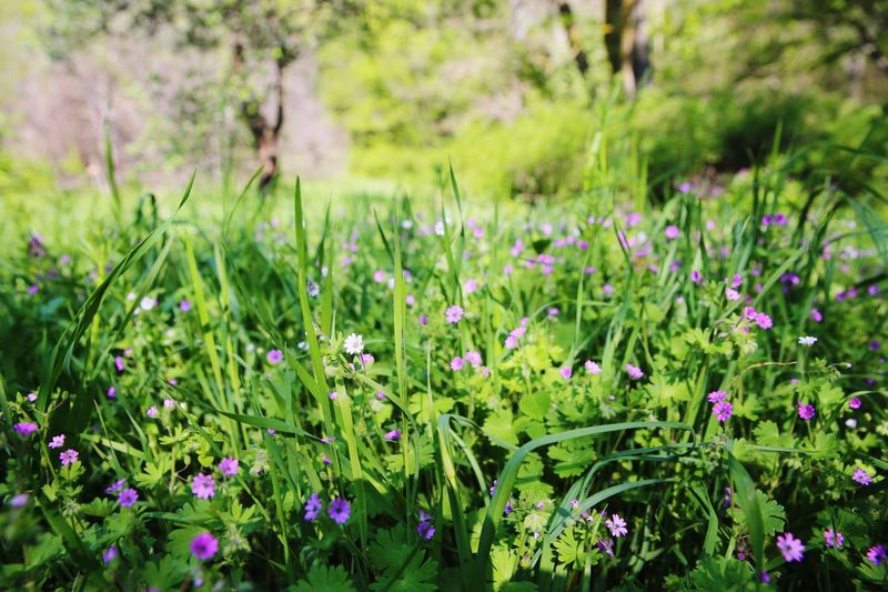 Crimea Traveling Крым Nature Flowers Forest Rock Outdoors Hiking Spring