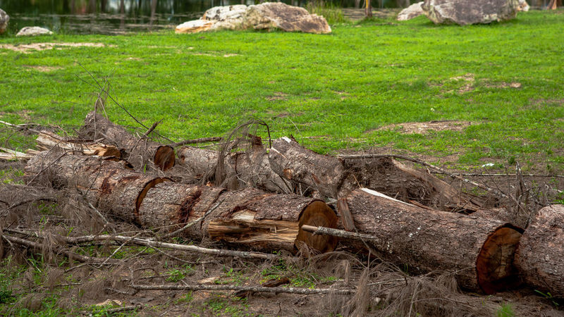 tree trunk Tree Trunk Wood Natural Cut Down Trees Damaged Deterioration Field Green Color Land Log Nature Plant Timber Tree Trunk Trunk Detail Trunk Texture Trunk Tree Trunkofwood Trunks Wood Wood - Material
