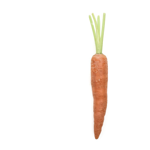 Single carrot on white background Carrot Copy Space Food Food Photography Fresh Fresh Produce Healthy Eating Orange Colour Organic Pointed Root Studio Shot Trimmed Vegetable White Background