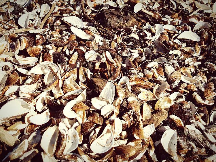 Full Frame Backgrounds Day Large Group Of Objects No People Outdoors Beach Nature Close-up EyeEm Best Shots EyeEm Nature Lover Muscheln Muschelschalen Strandgut