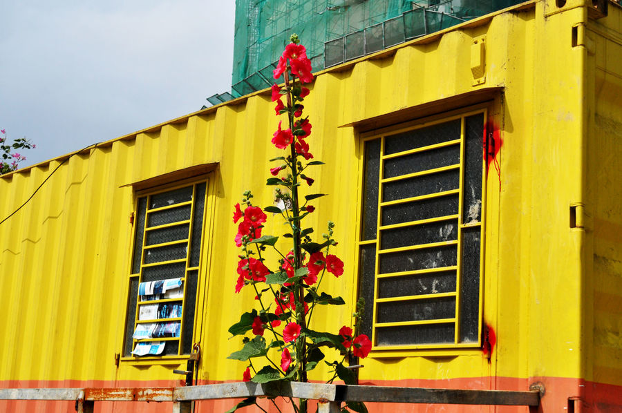 Flowers outside site office (adapted shipping container) for construction of hotel in Da Nang, Vietnam. Adapted To The City Architecture Building Sites City Construction Sites Da Nang Day Flowers Hotels Offices Shipping Containers Vietnam Window