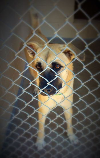 Close-up portrait of dog seen through chainlink fence