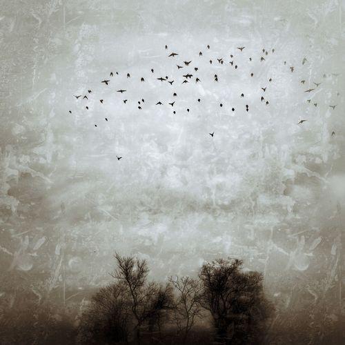 Bird Cloud - Sky Birds Vintage Photo EyeEm Nature Lover