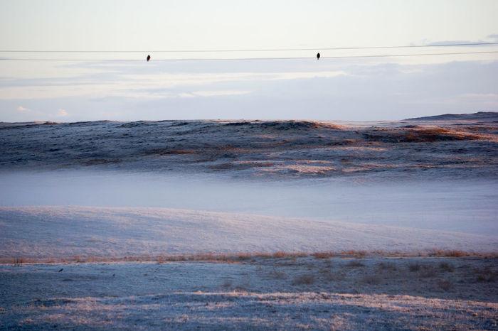 Beauty In Nature Birds Birds On A Wire Calm Idyllic Mist Misty Hillside Misty Morning Nature Non-urban Scene Outer Hebrides Remote Rural Landscape Scenics Scottish Solitude Tranquil Scene Tranquility Barren Hills Frosty Mornings Frosty Snowy
