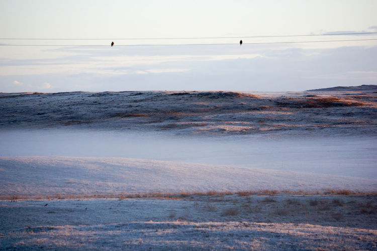 Beauty In Nature Birds Birds On A Wire Calm Idyllic Mist Misty Hillside Misty Morning Nature Non-urban Scene Outer Hebrides Remote Rural Landscape Scenics Scottish Solitude Tranquil Scene Tranquility Barren Hills Frosty Mornings Frosty Snowy
