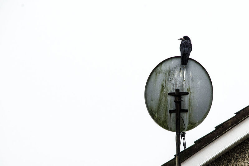 Low angle view of bird on roof against clear sky