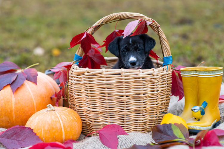 View of dog in basket on field