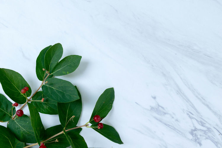 Elegant Green Sophisticated Beauty In Nature Class Close-up Cold Temperature Day Fragility Freshness Green Color Growth Leaf Marble Nature No People Outdoors Plant Snow Sophistication Texture Winter