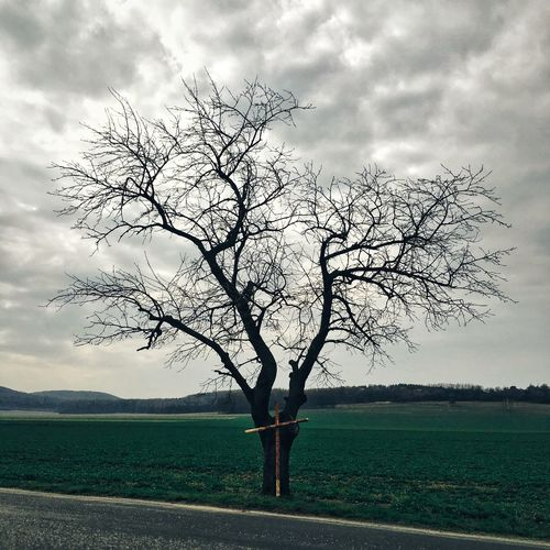 Bare tree on field against cloudy sky