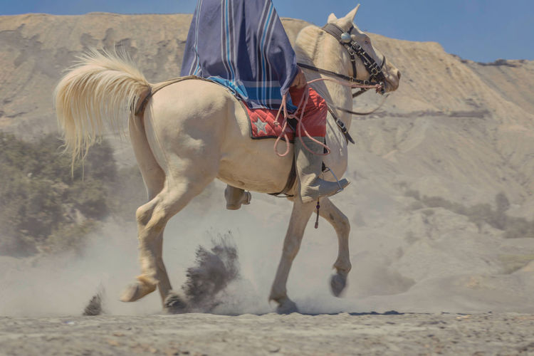 Horse riding on sand