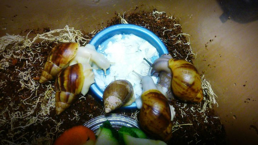 Cute Pets Snails Sweet Home Sweet Home Spb Animals