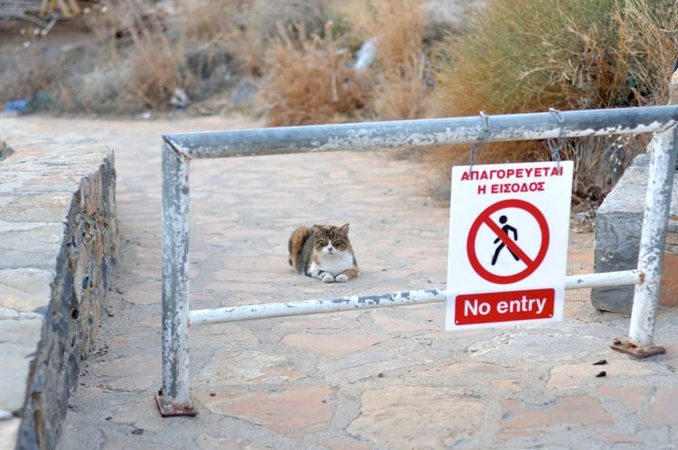 Forbidden The Great Outdoors - 2018 EyeEm Awards Animal Animal Themes Animal Wildlife Barrier Cat Communication Day Focus On Foreground Guidance Information Information Sign Interdiction Mammal Nature No People One Animal Outdoors Road Sign Text Warning Sign