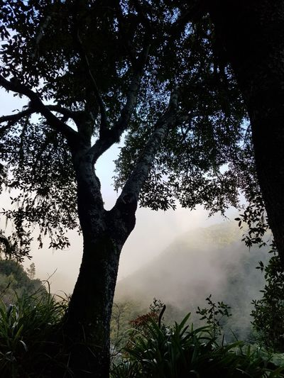 Sillhouette Fog Levada Walk Levada Velha Bildfolge Landscape_Collection Photography Landscape_photography Madeira Island Vacation Time Laurel Forest Backlight Plants Nature Photography Nature_collection Tree Nature Outdoors Forest Tree Trunk Silhouette No People Landscape Branch Sky Day Beauty In Nature
