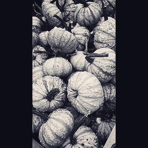 Pumpkins Pumpkin Matthys Blackandwhite Texture