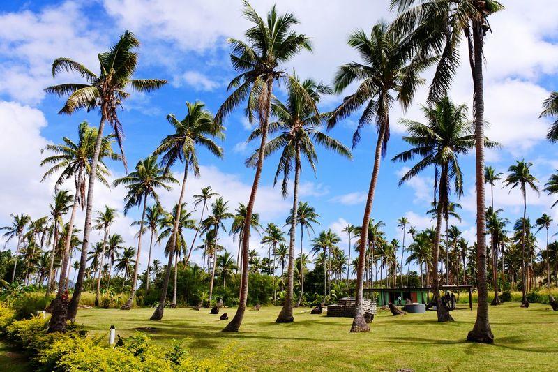 How I miss Fiji🌴 Palm Tree Tree Growth Nature Sky Tranquility Cloud - Sky Fiji Fiji Islands Fiji Photos