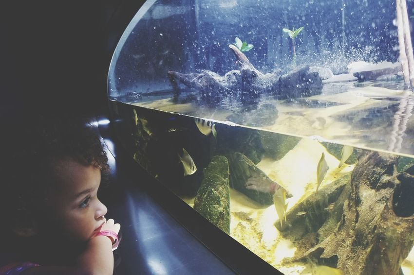 EyeEm Selects Water One Person Child Aquarium Learning Looking Through Window Childhood