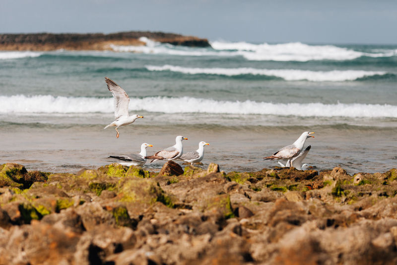 Seagulls On Shore At Beach