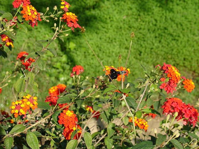 Abejorro Naturaleza Nature Photography Flowers Flores