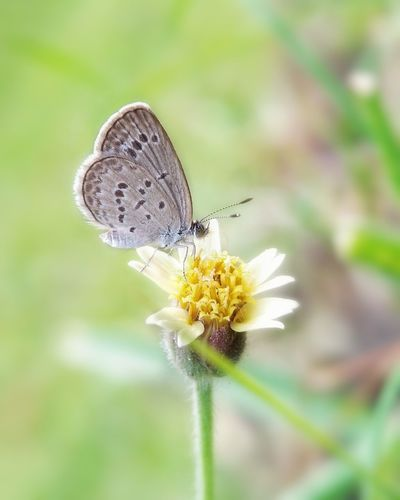 Insect Flower Animals In The Wild Butterfly - Insect Fragility Animal Themes Plant Nature Animal Wildlife One Animal No People Tranquility Uncultivated Perching Freshness Full Length Outdoors Close-up Day Flower Head