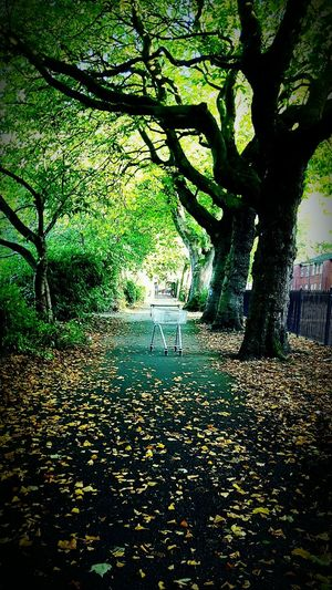 Trolley Lost Trolley Park Pathway Autumn Tree Beauty In Nature Random Objects Things In Strange Places