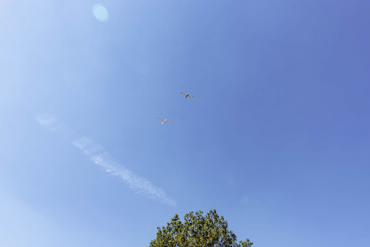 low angle view of airplane flying in sky Air Vehicle Airplane Blue Cloud - Sky Day Feld Flying Juli Low Angle View Mid-air Mode Of Transportation Motion Nature No People on the move Outdoors Plane Plant Sky Solitärbäume Transportation Travel Tree Vapor Trail