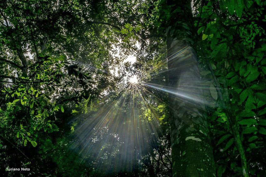 Lights Nikon D5300 Belempara Amazon Forrest Sun Green Lights EyeEm Gallery EyeEm Best Shots