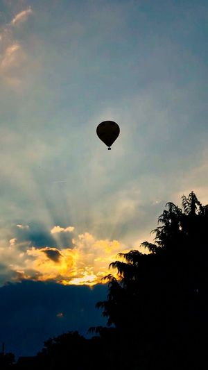 Sky Silhouette Cloud - Sky Low Angle View Sunset Tree Mid-air Hot Air Balloon Balloon